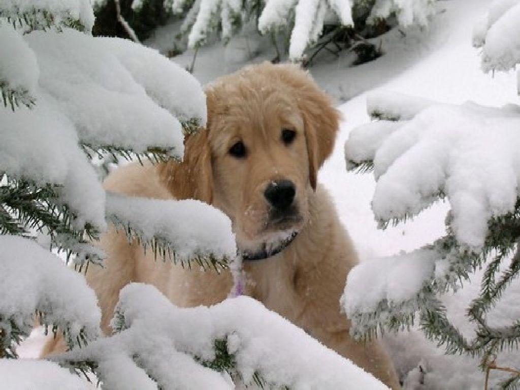 Sa protejam animalele de companie de frig