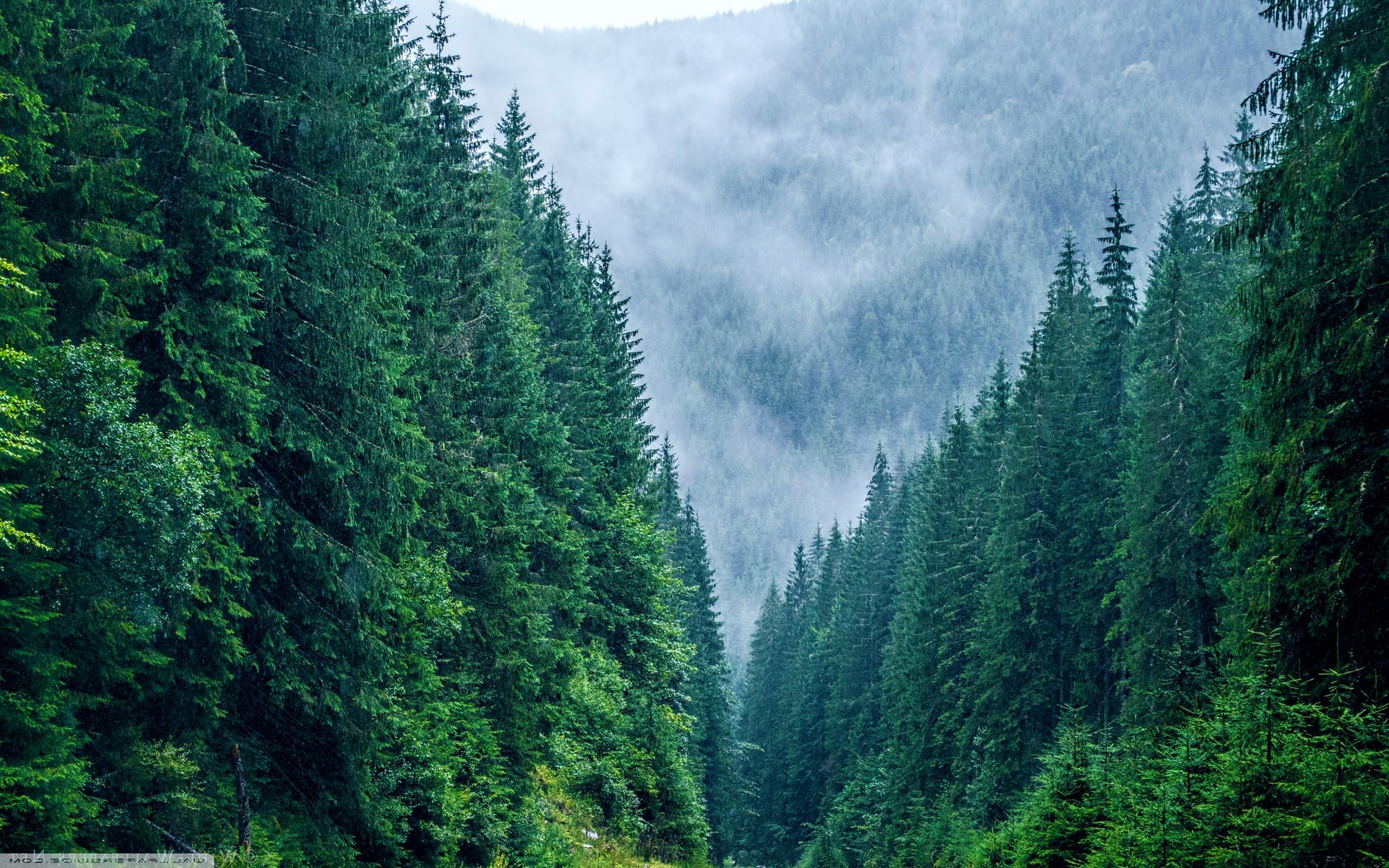 """""""Plantează în România"""": peste 150.000 de puieţi, plantaţi în 24 de ore. Cum te poţi implica"""